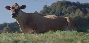 Vaca Home Trebolac