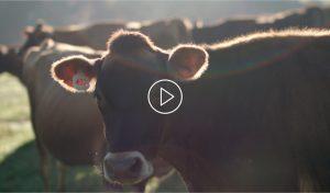 Preview Nuestras Vacas Trebolac