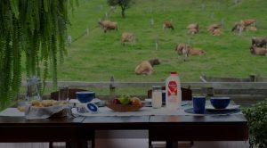 Mesa con productos Trebolac