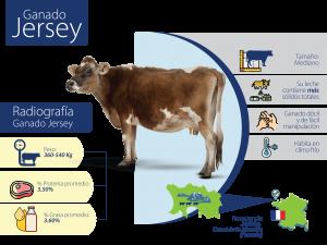 Vacas Jersey Trebolac