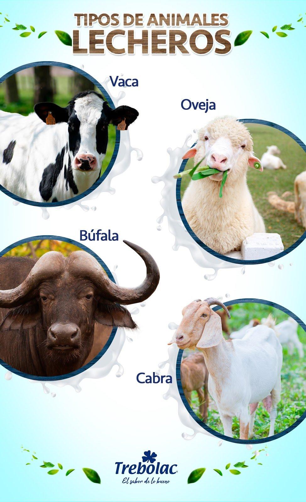 Infografía de animales lecheros